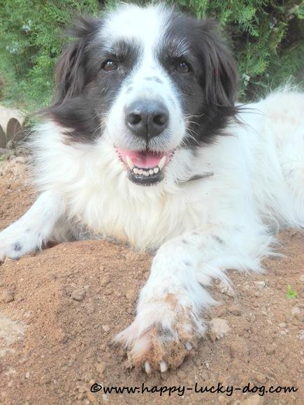 My beautiful senior dog enjoying sunny afternoon