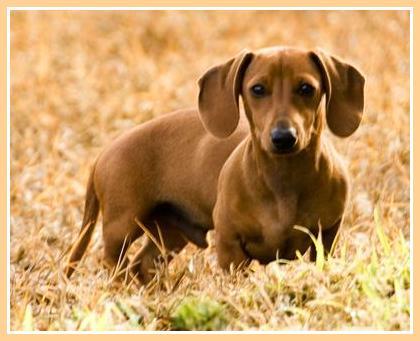 cute dog photos Napoleon