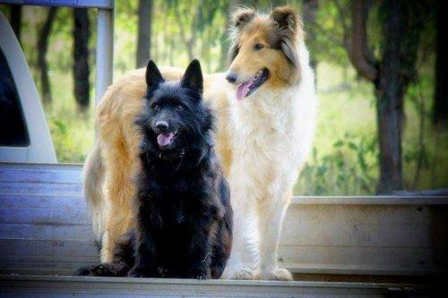 cute dog photos two beautiful dogs