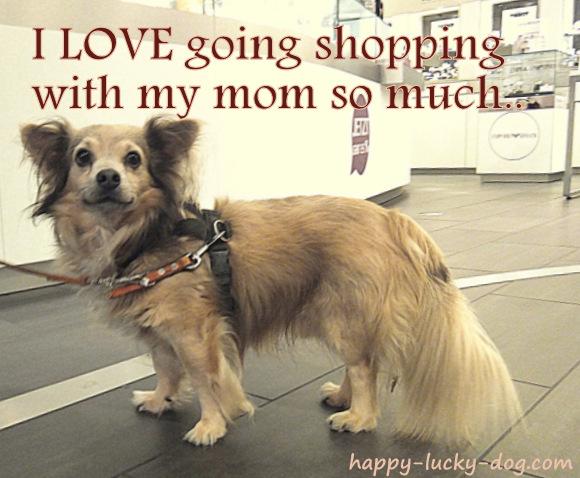 Small dog at the mall