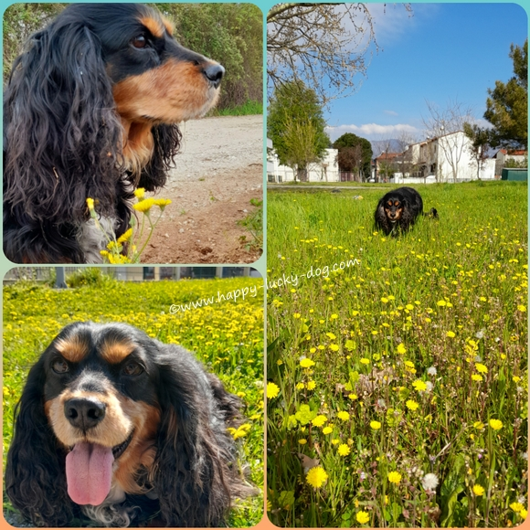 Photo collage of dog in the Spring fields