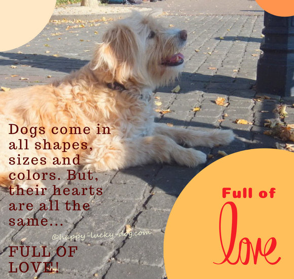 Dogs hearts are full of love