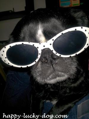 Funny dog photos, Venus is a star