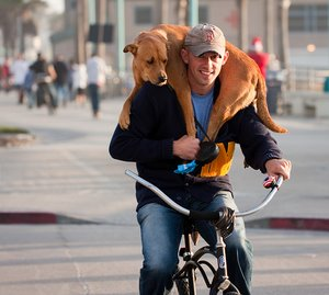 Funny dog photos, spoiled dog