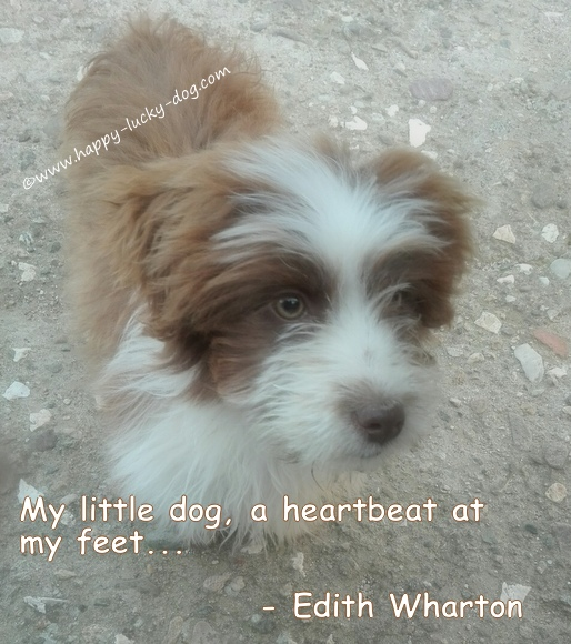 Small dog quote