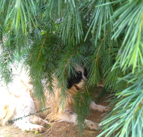 My dog hiding under tree in the garden