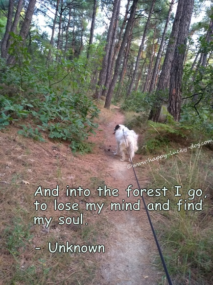 Roza walking into the forest