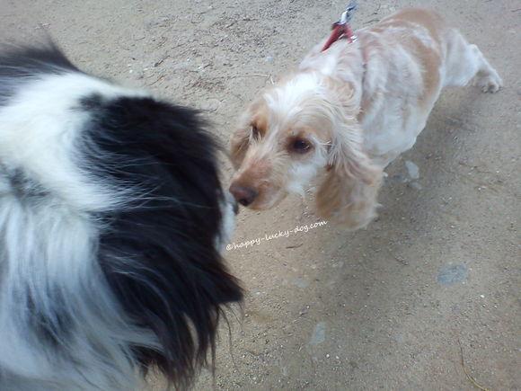 My dog met a cute little puppy