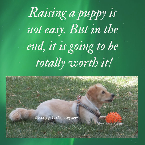 Quote about puppies, photo of puppy at park.