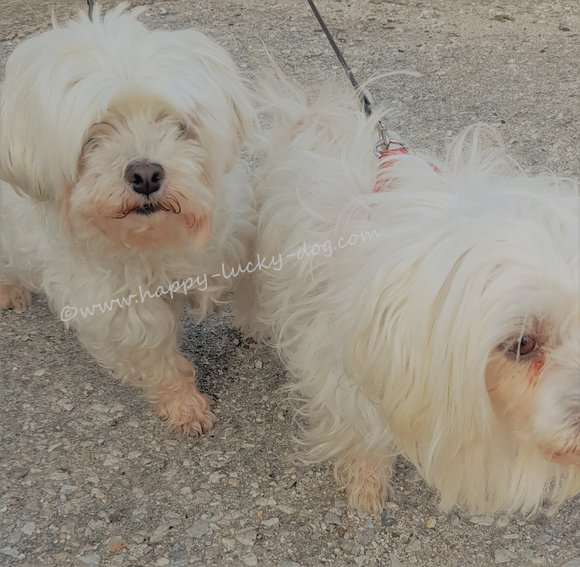 Two cute small white dogs ></a></center></p></div><div class='blogItItem'><a name=
